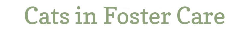 Foster Care Nature Vs Nurture